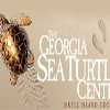 "Every Day Is Reason to ""Shell-e-brate"" at the Georgia Sea Turtle Center on Jekyll Island!"